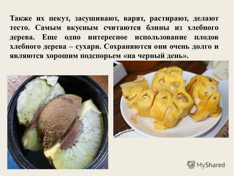 Также их пекут, засушивают, варят, растирают, делают тесто. Самым вкусным считаются блины из хлебного дерева. Еще одно интересное использование плодов хлебного дерева – сухари. Сохраняются они очень долго и являются хорошим подспорьем «на черный день