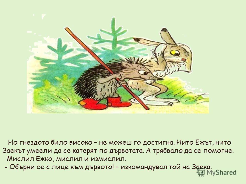 Но гнездото било високо – не можеш го достигна. Нито Ежът, нито Заекът умеели да се катерят по дърветата. А трябвало да се помогне. Мислил Ежко, мислил и измислил. - Обърни се с лице към дървото! – изкомандувал той на Заека.