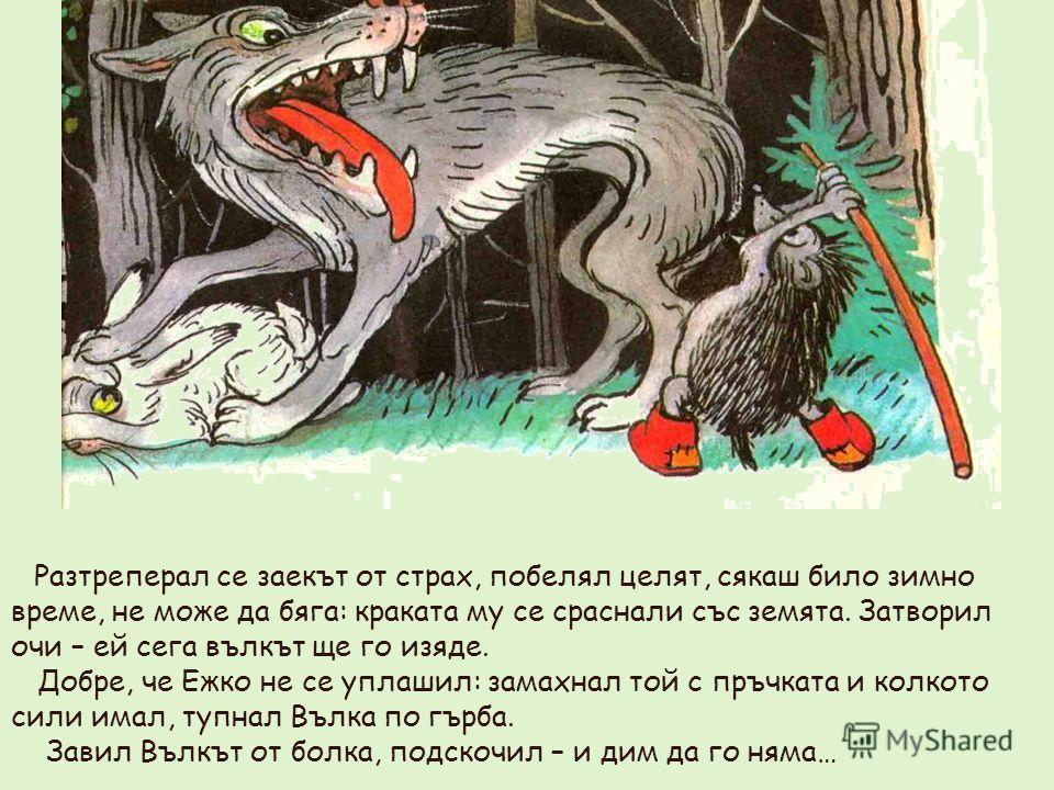 Разтреперал се заекът от страх, побелял целят, сякаш било зимно време, не може да бяга: краката му се сраснали със земята. Затворил очи – ей сега вълкът ще го изяде. Добре, че Ежко не се уплашил: замахнал той с пръчката и колкото сили имал, тупнал Въ