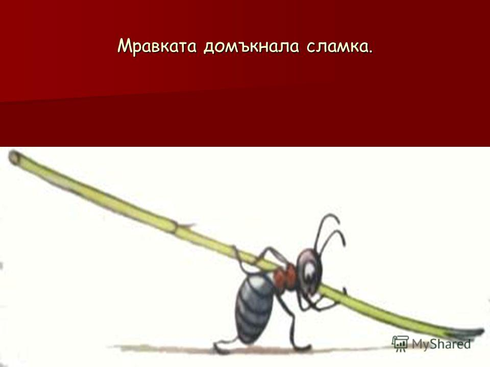 Мравката домъкнала сламка.