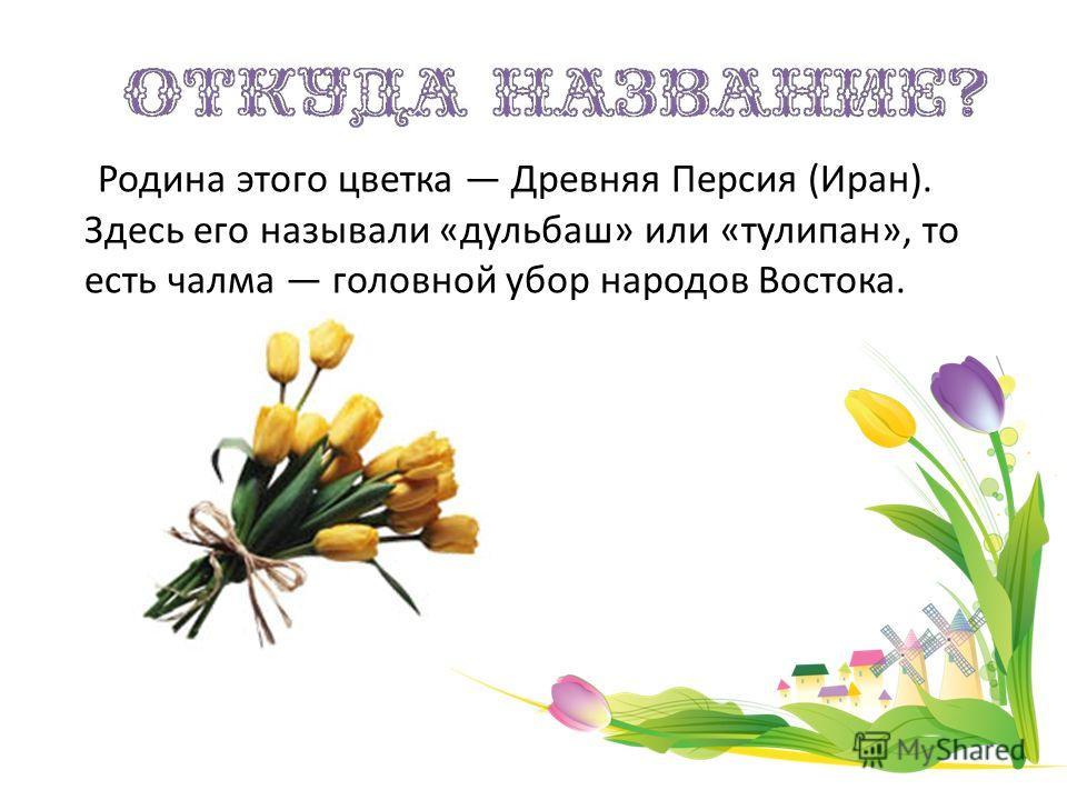 Родина этого цветка Древняя Персия (Иран). Здесь его называли «дульбаш» или «тулипан», то есть чалма головной убор народов Востока.