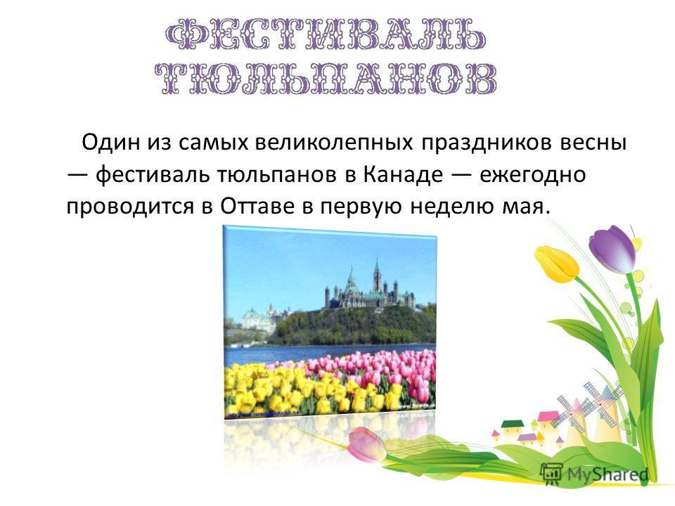 Один из самых великолепных праздников весны фестиваль тюльпанов в Канаде ежегодно проводится в Оттаве в первую неделю мая.