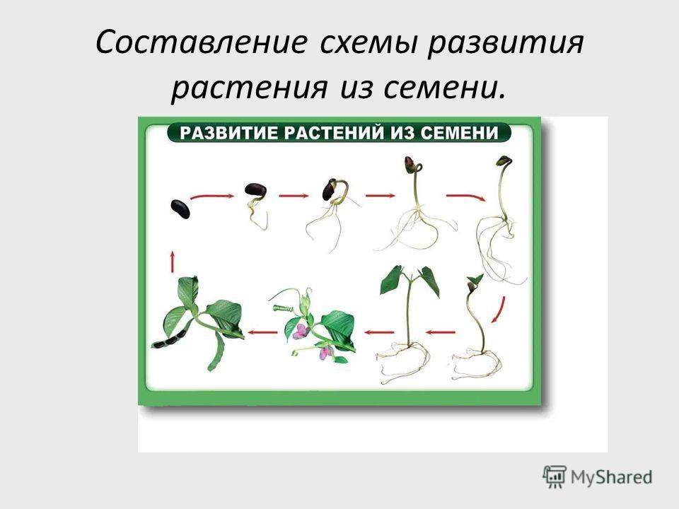 Почему не все виды выбранных семян удалось прорастить?