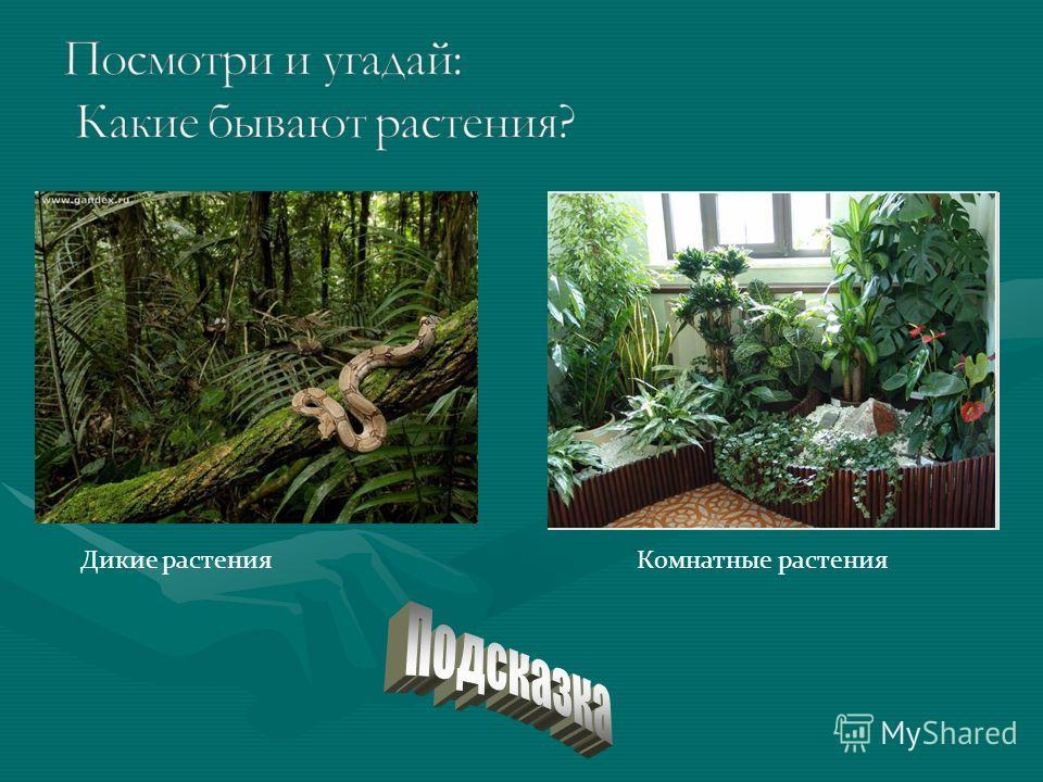 Дикие растенияКомнатные растения