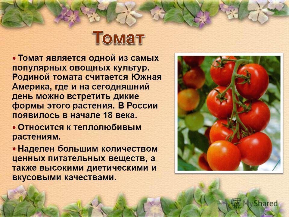 Томат является одной из самых популярных овощных культур. Родиной томата считается Южная Америка, где и на сегодняшний день можно встретить дикие формы этого растения. В России появилось в начале 18 века. Относится к теплолюбивым растениям. Наделен б