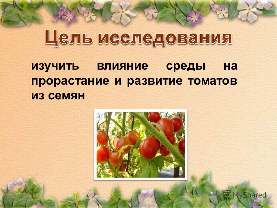 изучить влияние среды на прорастание и развитие томатов из семян