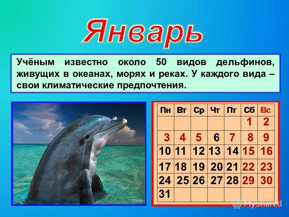 Учёным известно около 50 видов дельфинов, живущих в океанах, морях и реках. У каждого вида – свои климатические предпочтения.