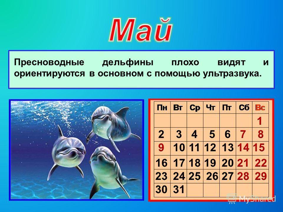 Пресноводные дельфины плохо видят и ориентируются в основном с помощью ультразвука.