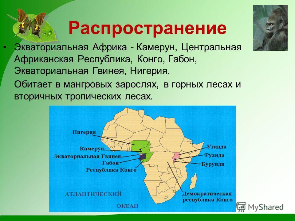 восточные западные Виды горилл Западные гориллы меньше, чем восточные и их шерсть с рыжеватым оттенком. Шерсть восточных горилл абсолютно черная, а лицо – более узкое.