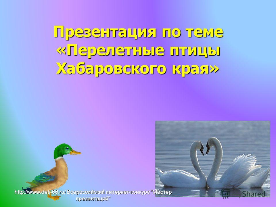 Презентация по теме «Перелетные птицы Хабаровского края» http://www.deti-66.ru/ Всероссийский интернет-конкурс Мастер презентаций