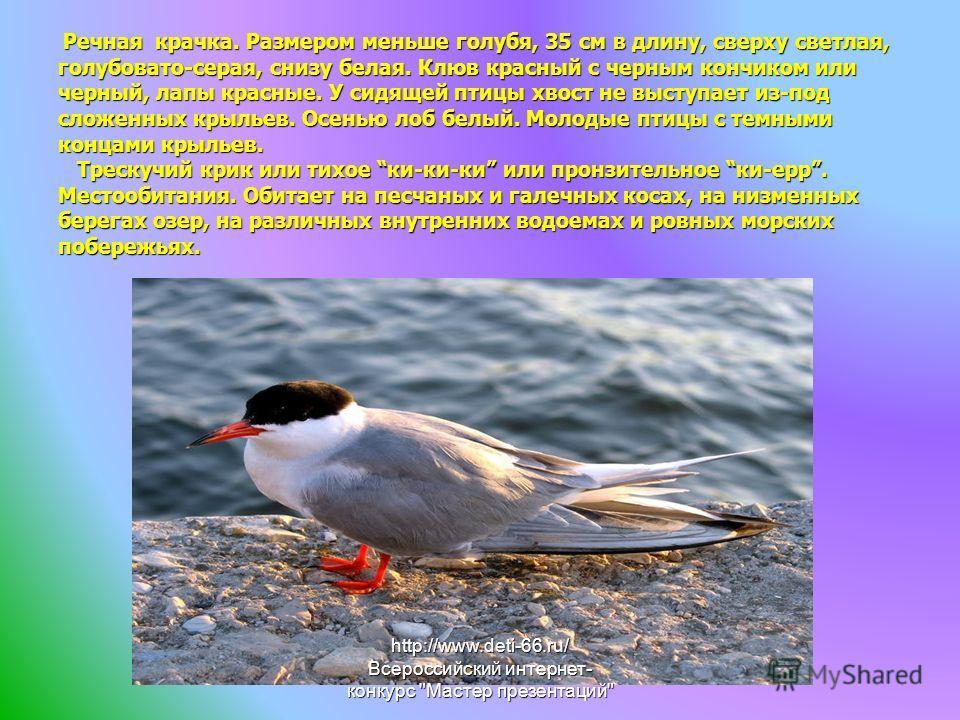 Речная крачка. Размером меньше голубя, 35 см в длину, сверху светлая, голубовато-серая, снизу белая. Клюв красный с черным кончиком или черный, лапы красные. У сидящей птицы хвост не выступает из-под сложенных крыльев. Осенью лоб белый. Молодые птицы