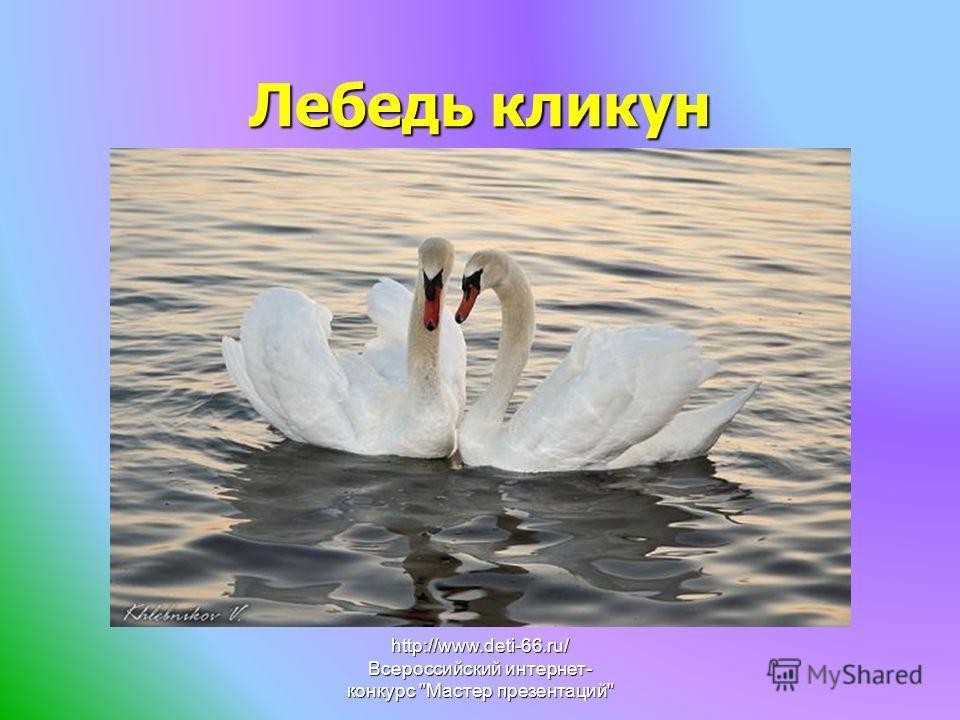 Лебедь кликун http://www.deti-66.ru/ Всероссийский интернет- конкурс Мастер презентаций