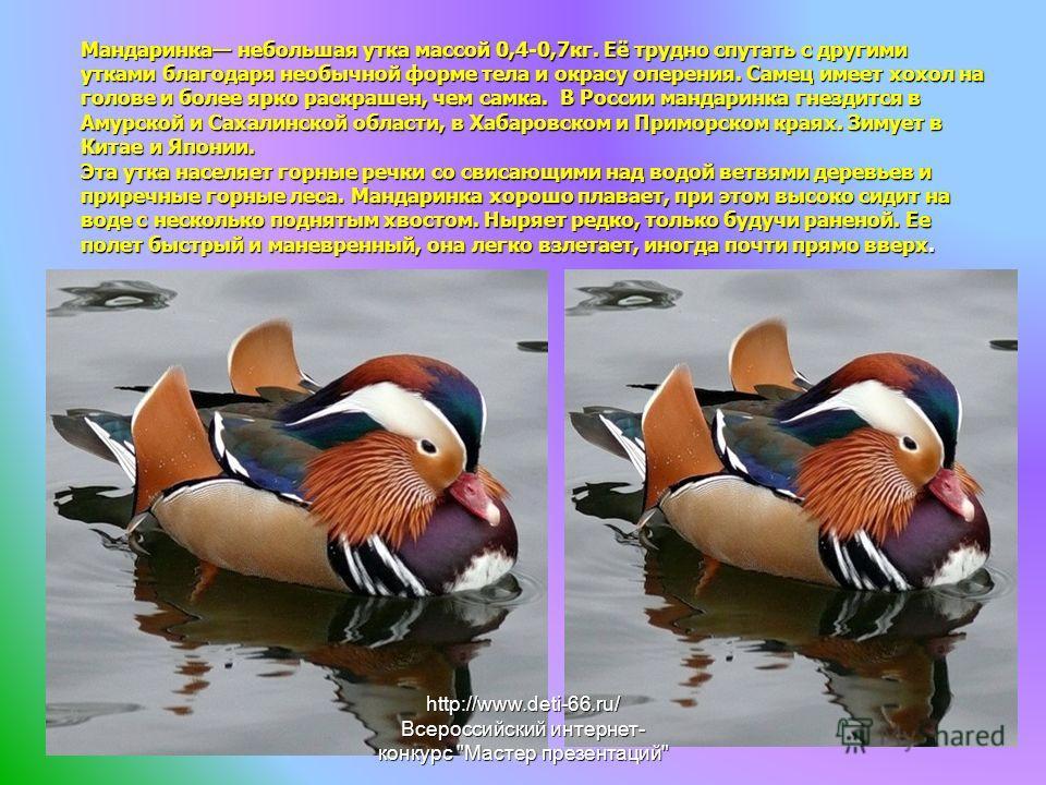 Мандаринка небольшая утка массой 0,4-0,7кг. Её трудно спутать с другими утками благодаря необычной форме тела и окрасу оперения. Самец имеет хохол на голове и более ярко раскрашен, чем самка. В России мандаринка гнездится в Амурской и Сахалинской обл