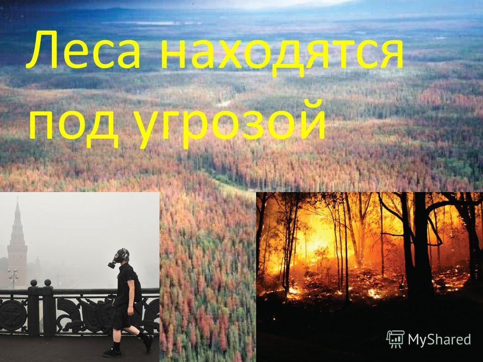 Леса находятся под угрозой
