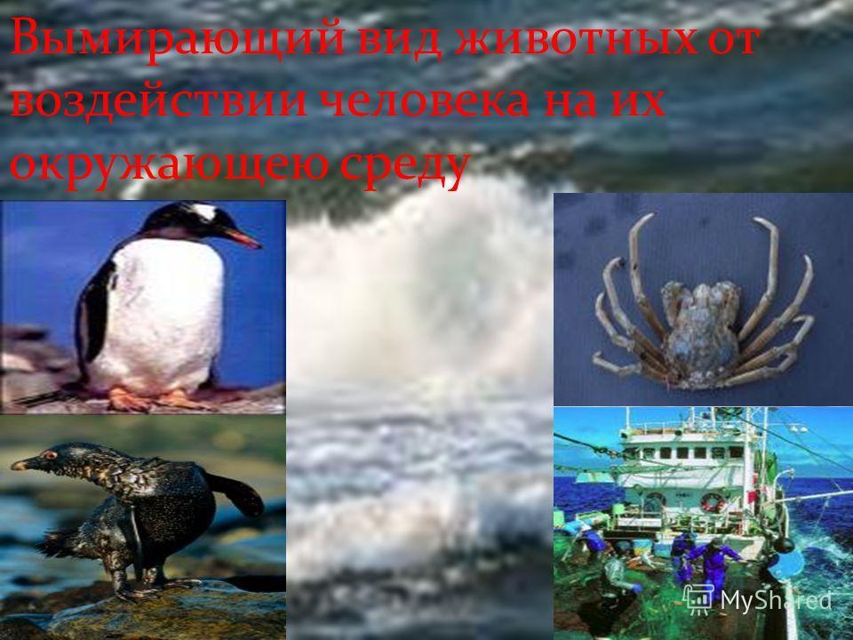 Вымирающий вид животных от воздействии человека на их окружающею среду