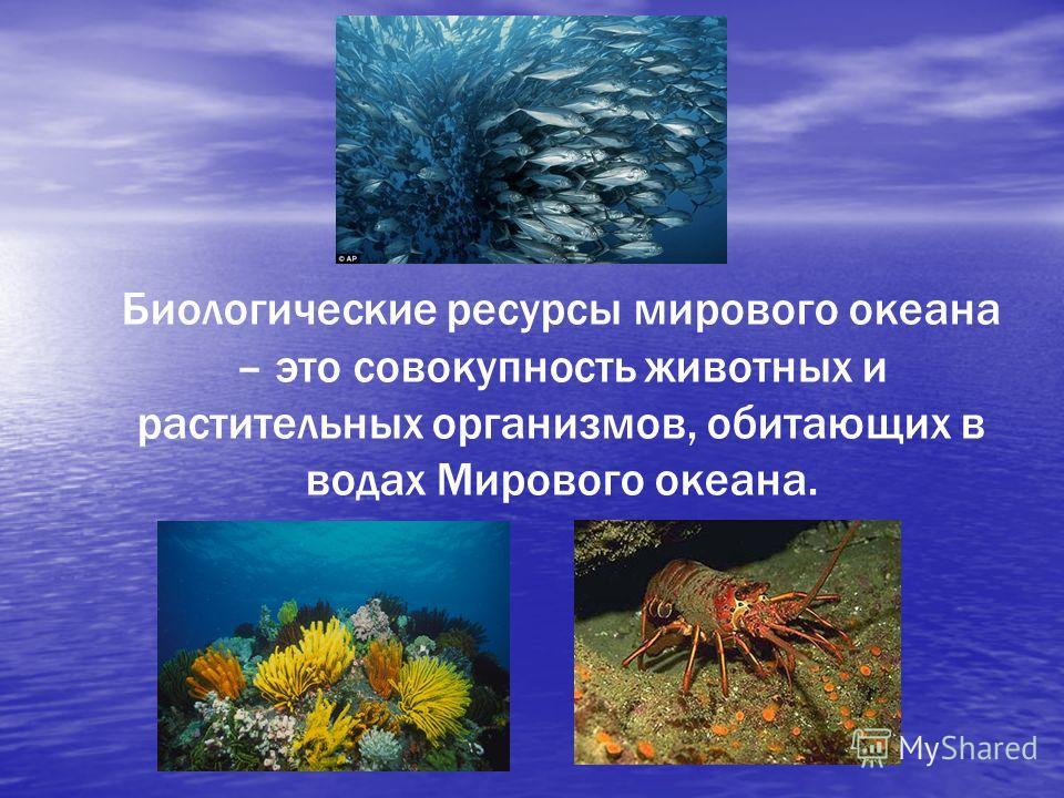 Биологические ресурсы мирового океана – это совокупность животных и растительных организмов, обитающих в водах Мирового океана.
