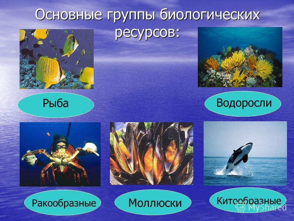 Основные группы биологических ресурсов: Рыба Ракообразные Водоросли Моллюски Китообразные