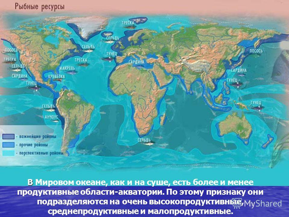 В В Мировом океане, как и на суше, есть более и менее продуктивные области-акватории. По этому признаку они подразделяются на очень высокопродуктивные, среднепродуктивные и малопродуктивные.