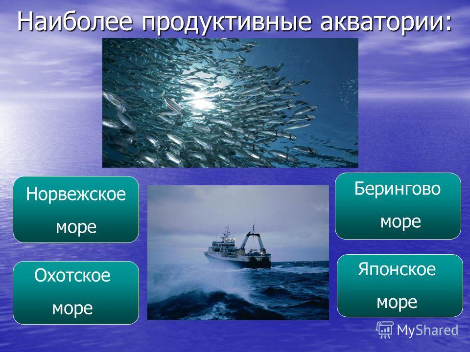 Наиболее продуктивные акватории: Норвежское море Охотское море Берингово море Японское море