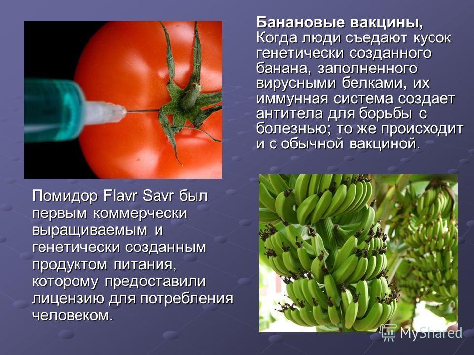 Помидор Flavr Savr был первым коммерчески выращиваемым и генетически созданным продуктом питания, которому предоставили лицензию для потребления человеком. Помидор Flavr Savr был первым коммерчески выращиваемым и генетически созданным продуктом питан