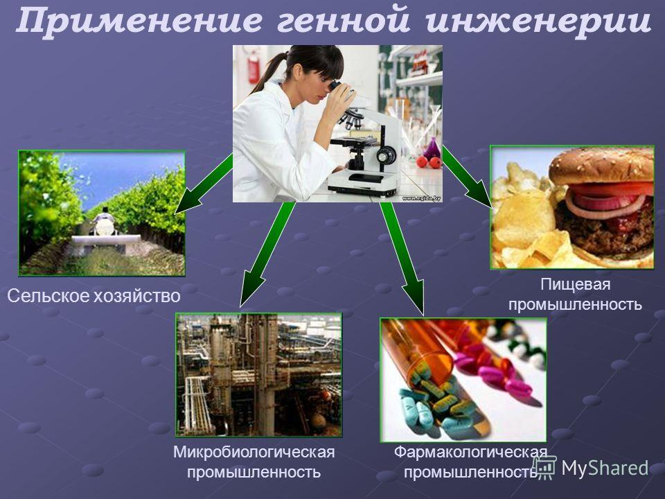 Применение генной инженерии Сельское хозяйство Микробиологическая промышленность Фармакологическая промышленность Пищевая промышленность