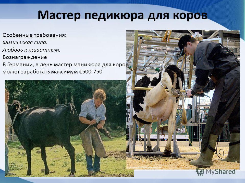 Мастер педикюра для коров Особенные требования: Физическая сила. Любовь к животным. Вознаграждение В Германии, в день мастер маникюра для коров может заработать максимум 500-750