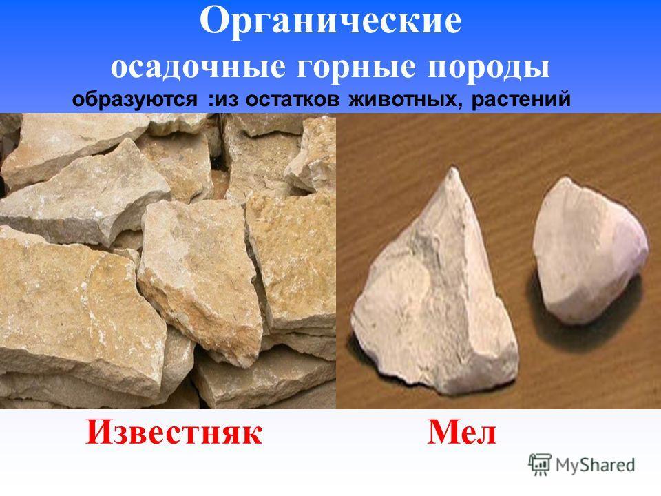 Органические осадочные горные породы Известняк Мел образуются :из остатков животных, растений