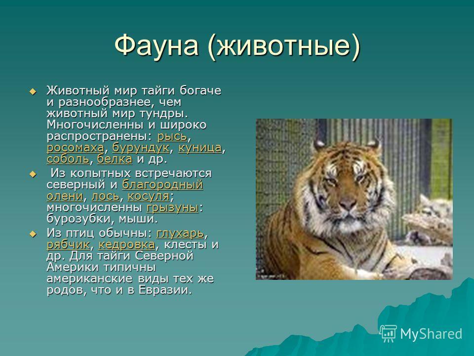 Фауна (животные) Животный мир тайги богаче и разнообразнее, чем животный мир тундры. Многочисленны и широко распространены: рысь, росомаха, бурундук, куница, соболь, белка и др. Животный мир тайги богаче и разнообразнее, чем животный мир тундры. Мног