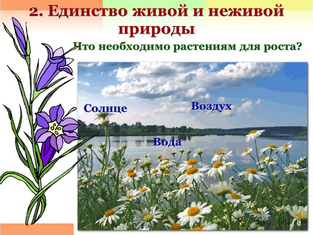 2. Единство живой и неживой природы Что необходимо растениям для роста? Что необходимо растениям для роста? Воздух Солнце Вода