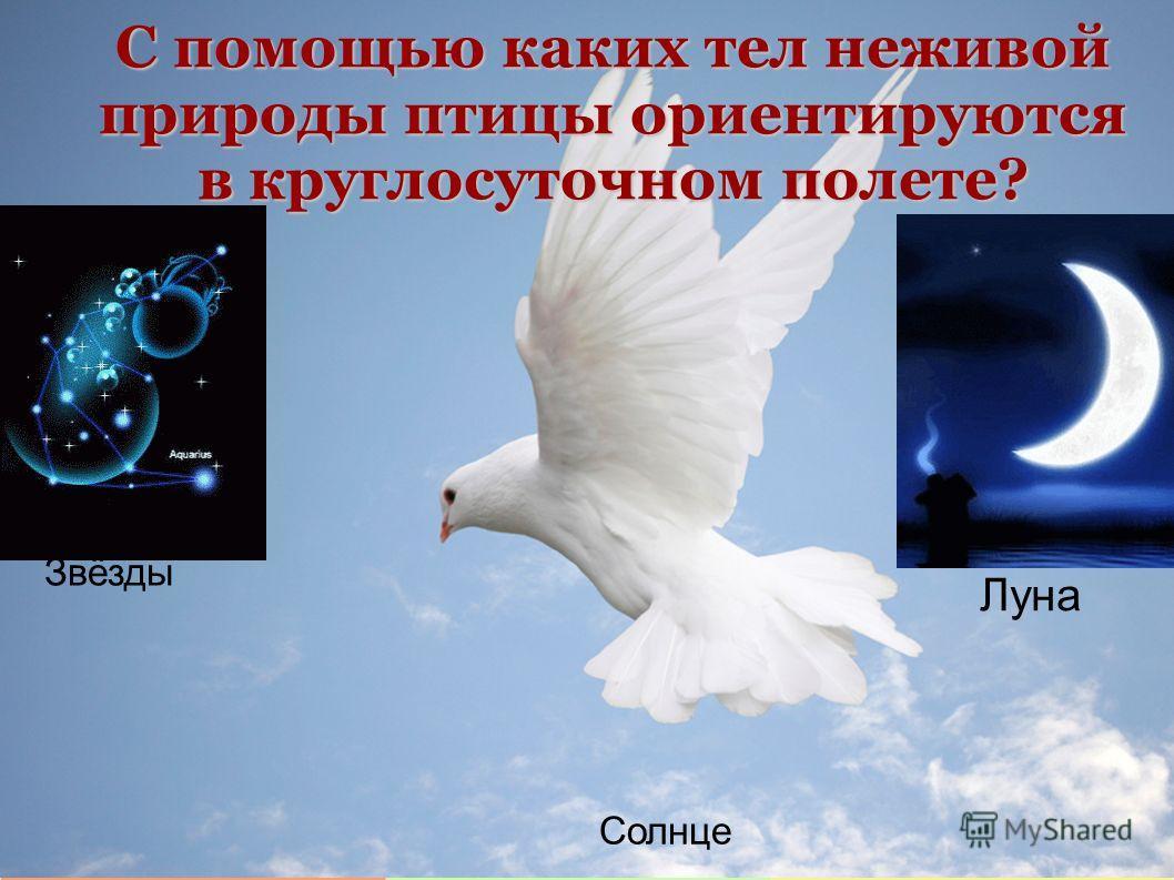 С помощью каких тел неживой природы птицы ориентируются в круглосуточном полете? Луна Солнце Звёзды