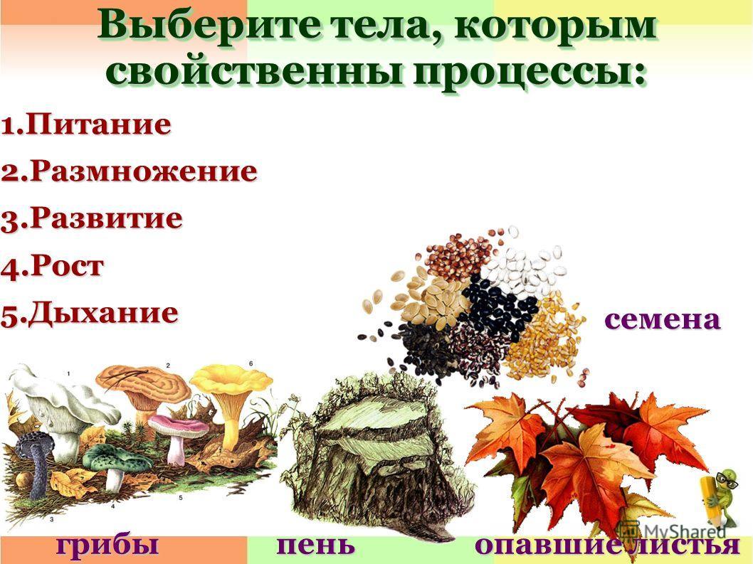 Выберите тела, которым свойственны процессы: 1.Питание2.Размножение3.Развитие4.Рост5.Дыхание грибыпень опавшие листья семена