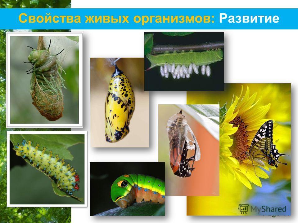Free Powerpoint Templates Page 11 Свойства живых организмов: Развитие