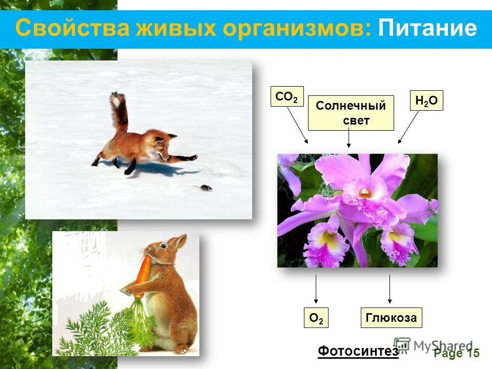 Free Powerpoint Templates Page 15 Свойства живых организмов: Питание СО 2 Солнечный свет Н2ОН2О О2О2 Глюкоза Фотосинтез