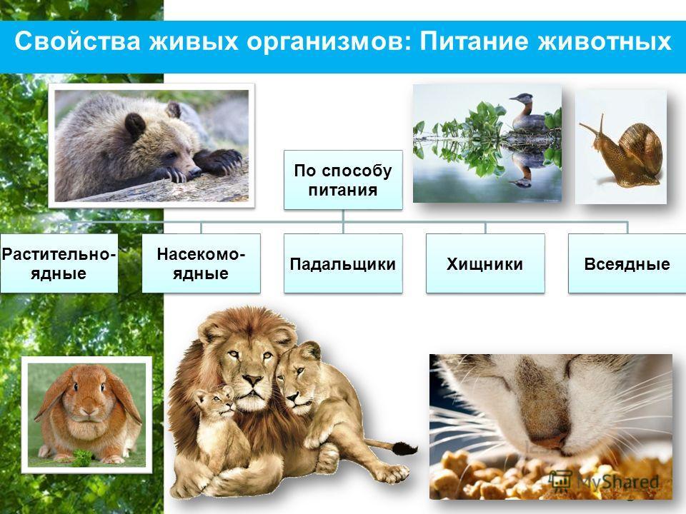 Free Powerpoint Templates Page 20 Свойства живых организмов: Питание животных По способу питания Растительно- ядные Насекомо- ядные ПадальщикиХищникиВсеядные