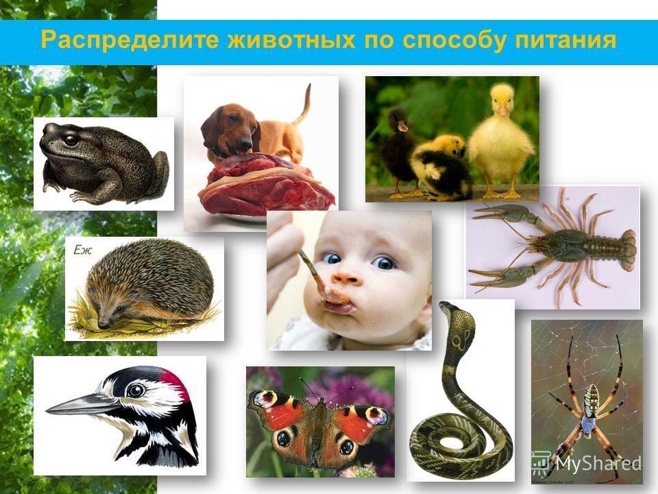 Free Powerpoint Templates Page 21 Распределите животных по способу питания