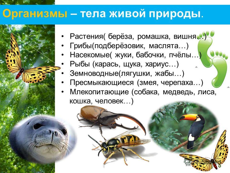 Free Powerpoint Templates Page 5 Организмы – тела живой природы. Растения( берёза, ромашка, вишня…) Грибы(подберёзовик, маслята…) Насекомые( жуки, бабочки, пчёлы…) Рыбы (карась, щука, хариус…) Земноводные(лягушки, жабы…) Пресмыкающиеся (змея, черепах