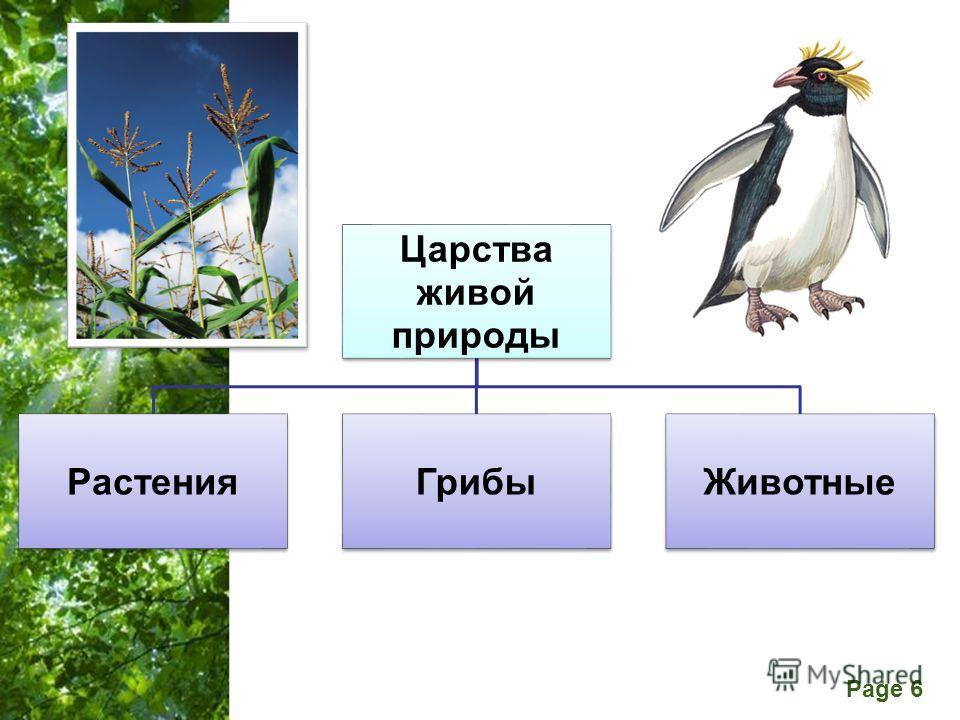Free Powerpoint Templates Page 6 Царства живой природы РастенияГрибыЖивотные