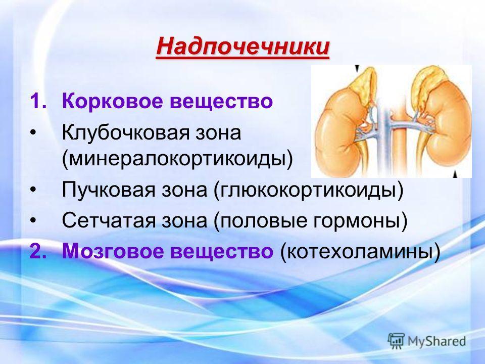 Надпочечники 1.Корковое вещество Клубочковая зона (минералокортикоиды) Пучковая зона (глюкокортикоиды) Сетчатая зона (половые гормоны) 2.Мозговое вещество (котехоламины)