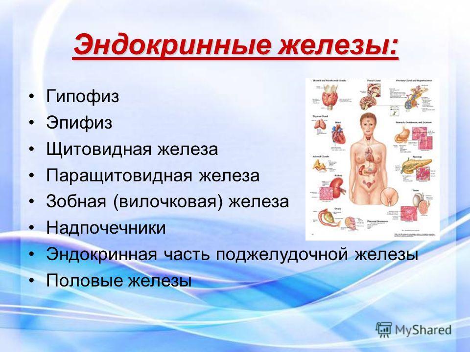 Эндокринные железы: Гипофиз Эпифиз Щитовидная железа Паращитовидная железа Зобная (вилочковая) железа Надпочечники Эндокринная часть поджелудочной железы Половые железы