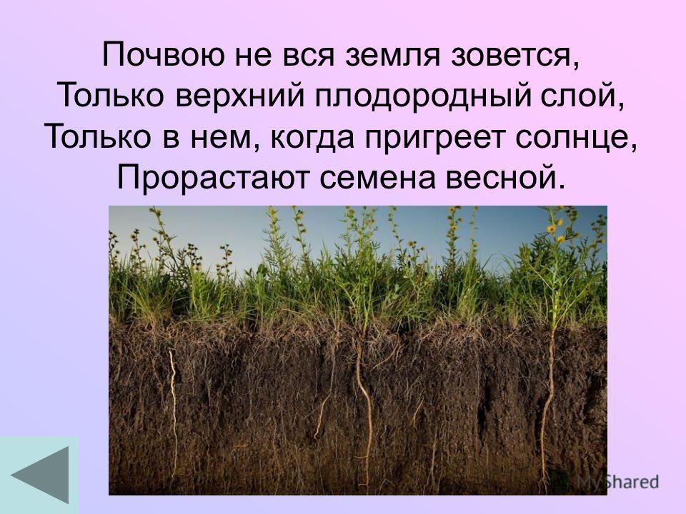 Почвою не вся земля зовется, Только верхний плодородный слой, Только в нем, когда пригреет солнце, Прорастают семена весной.