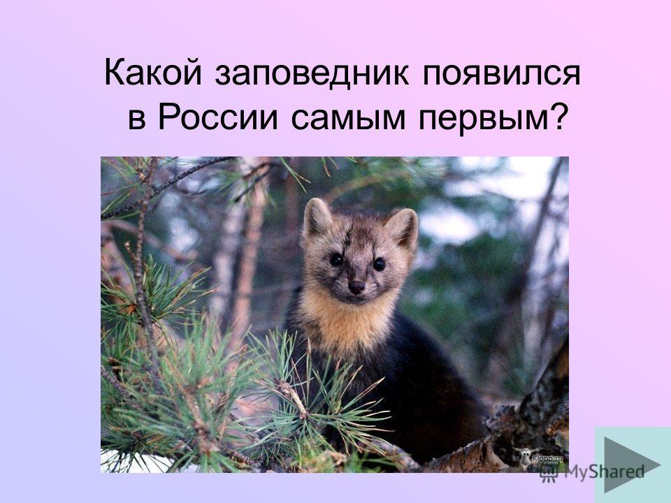 Какой заповедник появился в России самым первым?