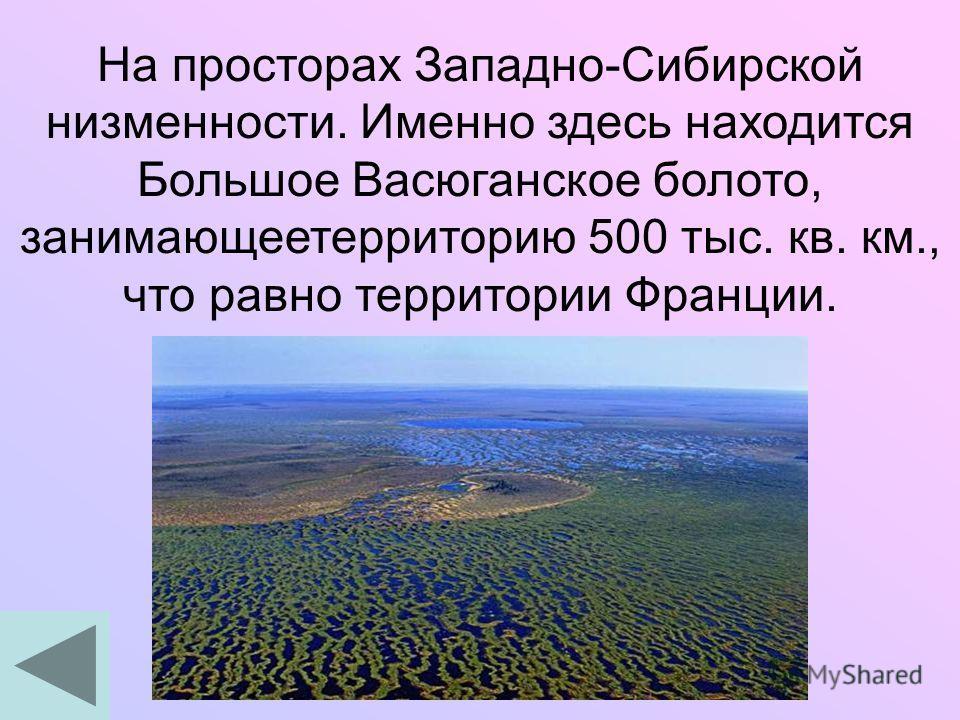 На просторах Западно-Сибирской низменности. Именно здесь находится Большое Васюганское болото, занимающеетерриторию 500 тыс. кв. км., что равно территории Франции.