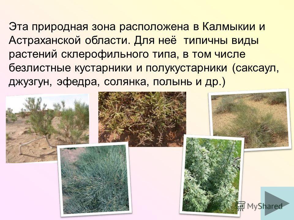 Эта природная зона расположена в Калмыкии и Астраханской области. Для неё типичны виды растений склерофильного типа, в том числе безлистные кустарники и полукустарники (саксаул, джузгун, эфедра, солянка, полынь и др.)