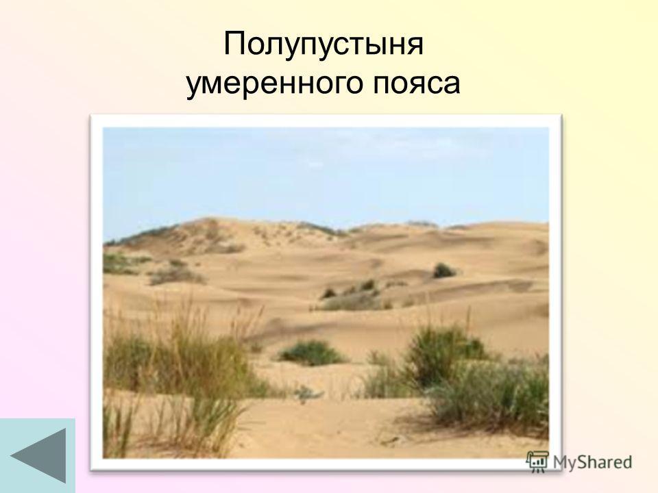 Полупустыня умеренного пояса