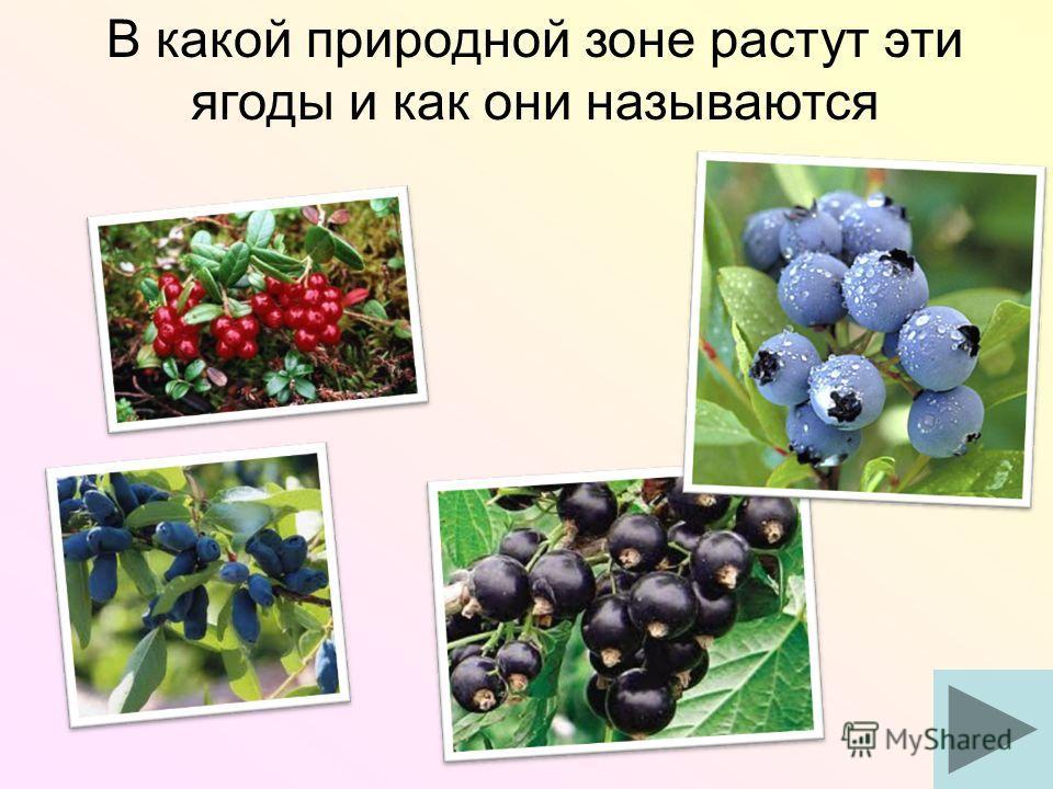 В какой природной зоне растут эти ягоды и как они называются