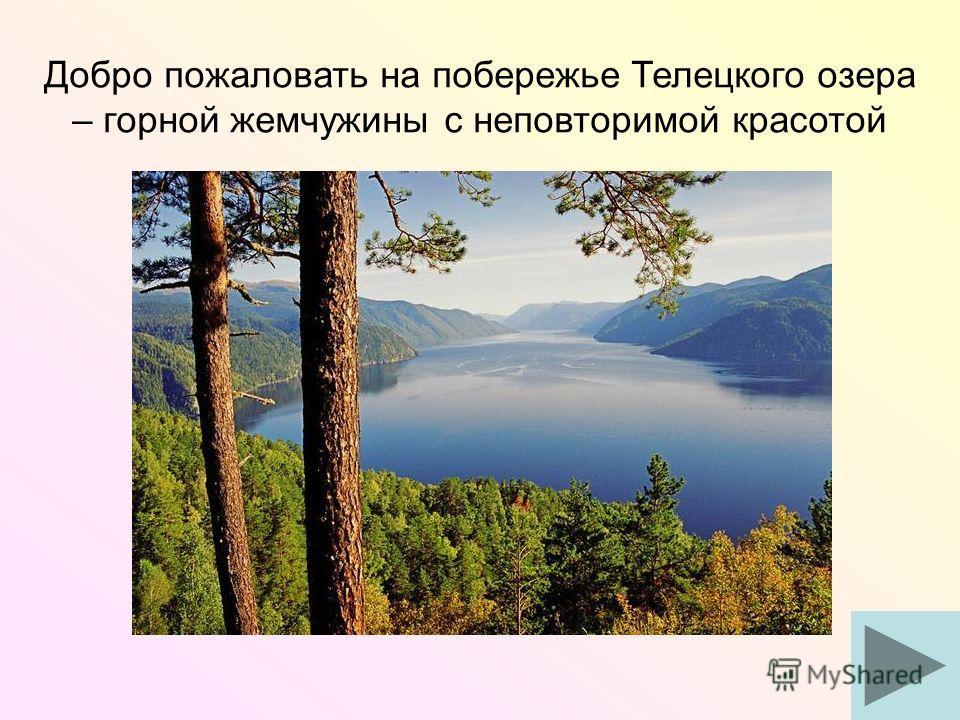 Добро пожаловать на побережье Телецкого озера – горной жемчужины с неповторимой красотой