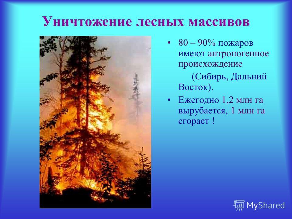 Уничтожение лесных массивов 80 – 90% пожаров имеют антропогенное происхождение (Сибирь, Дальний Восток). Ежегодно 1,2 млн га вырубается, 1 млн га сгорает !