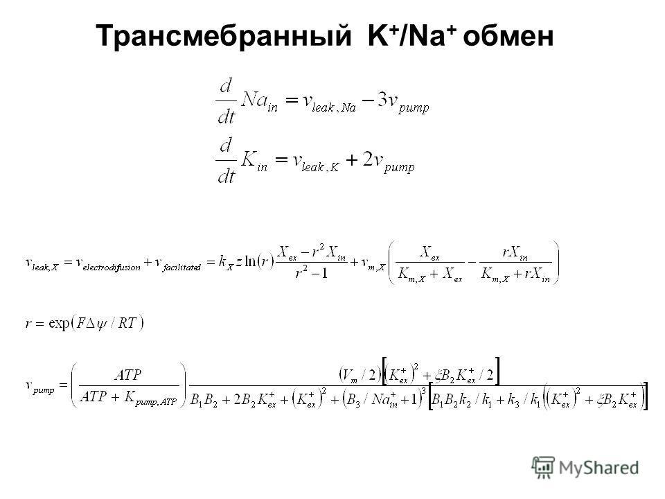 Трансмебранный K + /Na + обмен