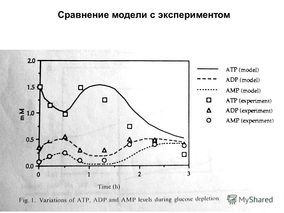 Сравнение модели с экспериментом