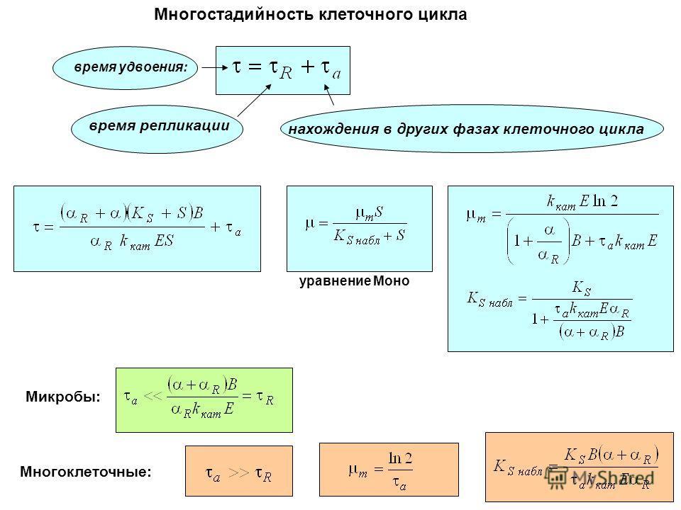 Многостадийность клеточного цикла время репликации нахождения в других фазах клеточного цикла время удвоения: уравнение Моно Микробы: Многоклеточные: